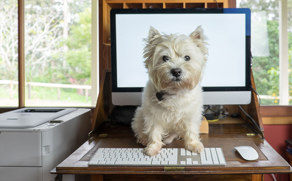 puppy sitting on open laptop at home desk